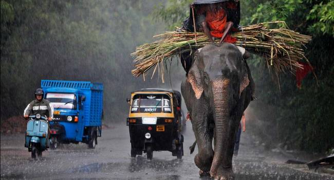 Подтверждено во всех уголках мира: ученые заявили о слишком частых дождях и жарких периодах на планете