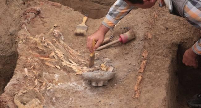 Хищник длиной 15 метров: ученые обнаружили скелет гигантского древнего дельфина