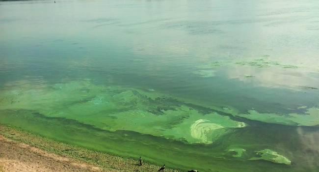 Дело не только в жаре: эколог объяснила, почему цветение украинских водоемов начинается так рано