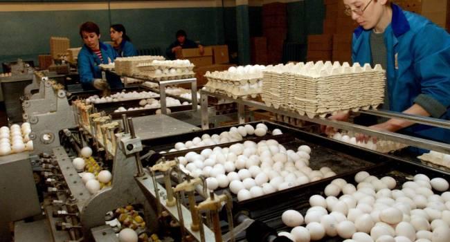 Политолог: из-за давления НАБУ Бахматюк закрывает часть своих птицефабрик