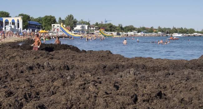 «Никто за этим не следит»: побережье Крыма превратилось в вонючее болото