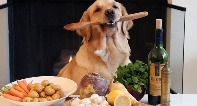 Смертельно опасно: кинолог назвал самые вредные для собак продукты