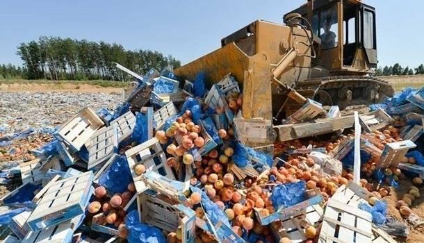 Лучше бы раздали бедным: в России за пять лет уничтожили 36 тысяч санкционных продуктов
