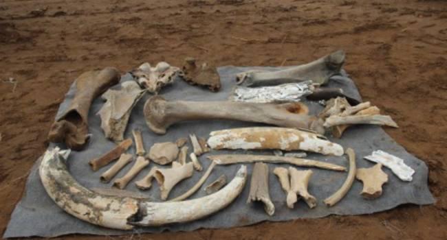 Рабочие российского нефтедобывающего предприятия обнаружили останки мамонта