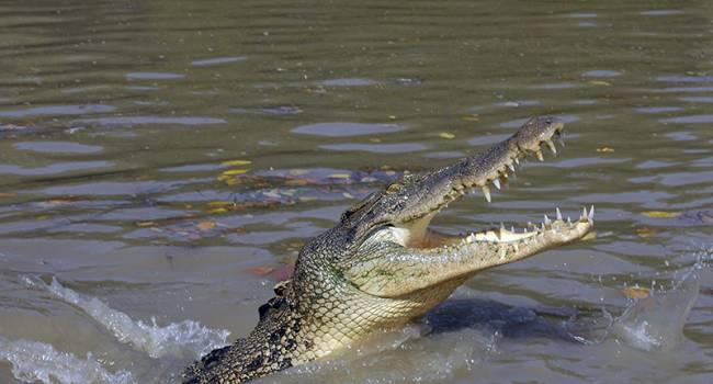 Купание запретили: немецкие рыбаки обнаружили крокодила в реке, - все силы брошены на поиски