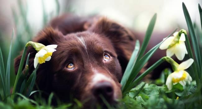«Держите от них животных подальше»: кинолог рассказал о самых опасных растениях для собак