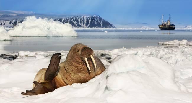 Такая ситуация прослеживается во всех уголках Земли: ученые обнаружили микроволокна джинсов в Арктике