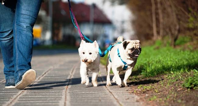 Кинолог назвал породы собак, идеально подходящие для людей, живущих в крупных городах