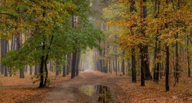Дожди не будут прекращаться: синоптики рассказали о погоде до конца сентября