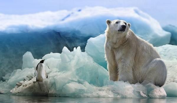 Уровень моря поднимется до 38 сантиметров: ученые NASA выступили с устрашающим прогнозом  о глобальном потеплении