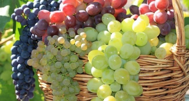 Эксперты рассказали, как выбрать самый полезный и вкусный виноград
