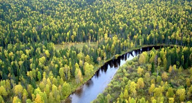 Российские ученые заявили о возможности управлять ростом деревьев при климатических изменениях
