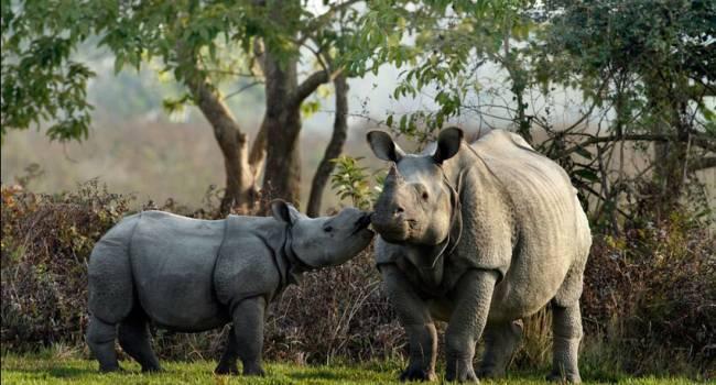 «Мир на грани нового вымирания»: ученые рассказали, сколько видов животных им удалось спасти за последние годы