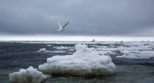 «Это не кратковременное явление»: ученые предупредили о рекордной потере льдов в Беринговом море
