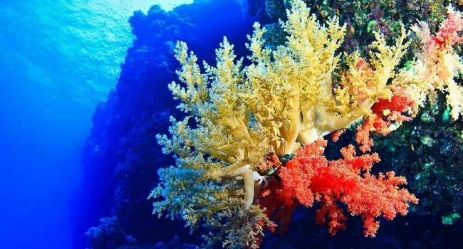 Ученые рассказали об уникальном коралловом парке в Гренландском море