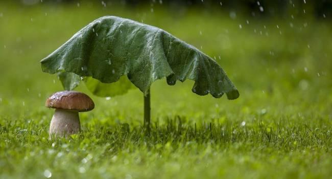 Дожди закончатся ближе к выходным: синоптики огорчили прогнозом на эту неделю