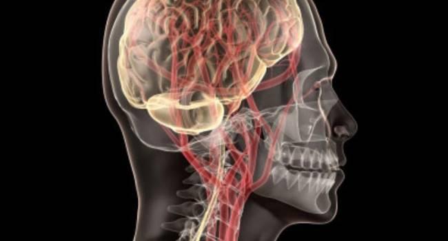 Ученые обнаружили новый орган в голове человека