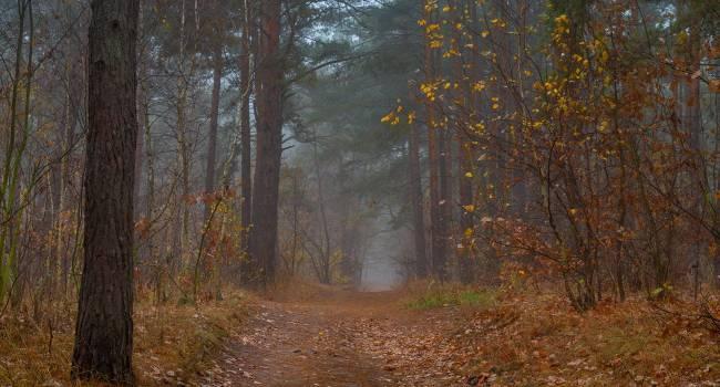 «Месяц будет щедрым на осадки»: синоптик рассказал о непростой погоде в ноябре