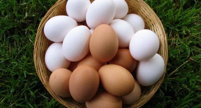 «Заявления о плохом холестерине - это миф»: диетологи рассказали о пользе куриных яиц