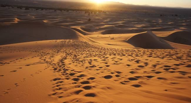 Ученые обнаружили в пустыне Сахаре почти 2 млрд деревьев