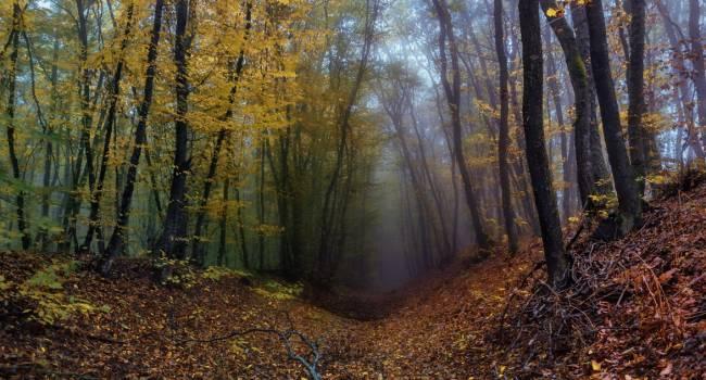«Погоду украсят дымки и туманы»: Синоптик дала прогноз на ближайшие дни
