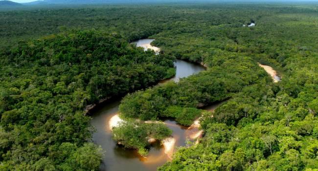 «Это тоже приведет к повышению температуры»: ученые предупредили о последствиях вырубки лесов Амазонии