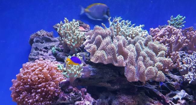 Впервые за 120 лет: вблизи Австралии ученые обнаружили огромный коралловый риф