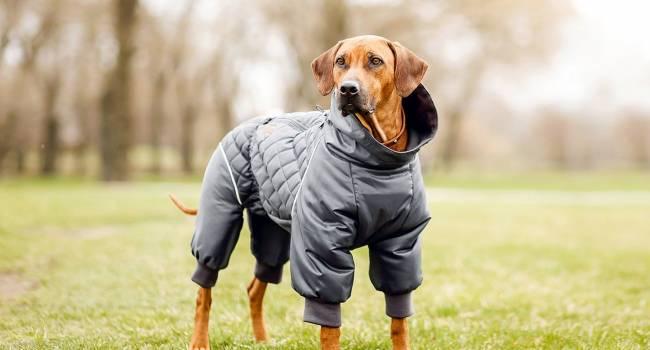 «Впереди холода»: Кинолог объяснил, как правильно выбирать одежду для собак
