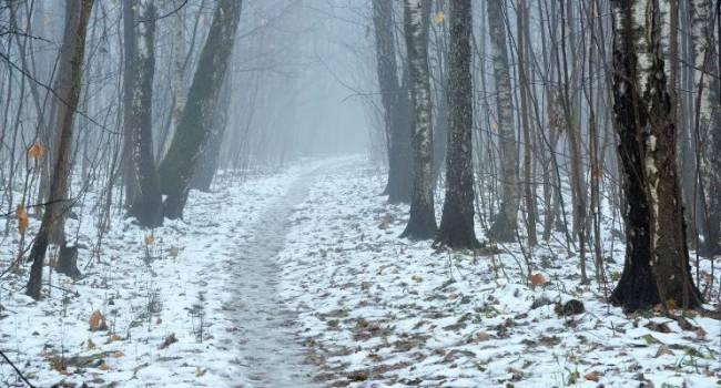 Ожидается плюсовая температура: синоптик рассказал о погоде в декабре