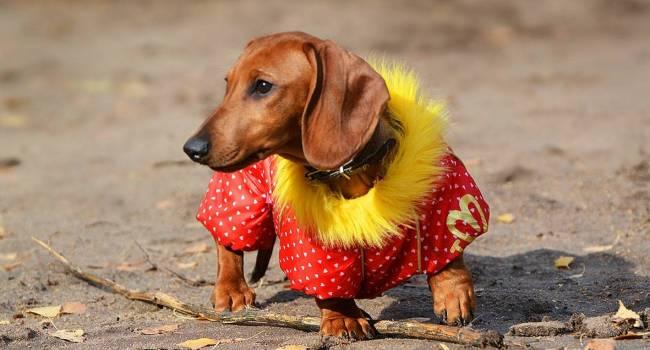 Кинолог назвал породы собак, которые больше всего боятся холода