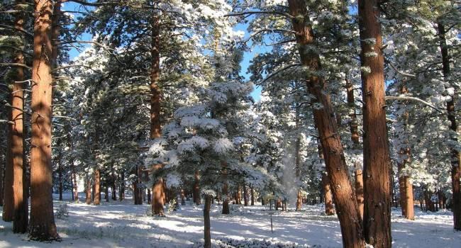 «Уже по традиции плюсовые температуры»: синоптик рассказал о погоде на Рождество и Новый год