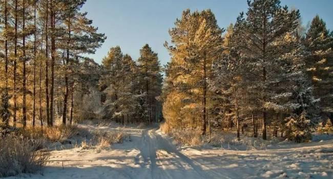 На 2 градуса выше средних значений: синоптики предупредили об аномально теплом декабре