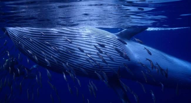 В Таиланде обнаружен скелет древнего кита с головой около 3 метров в длину