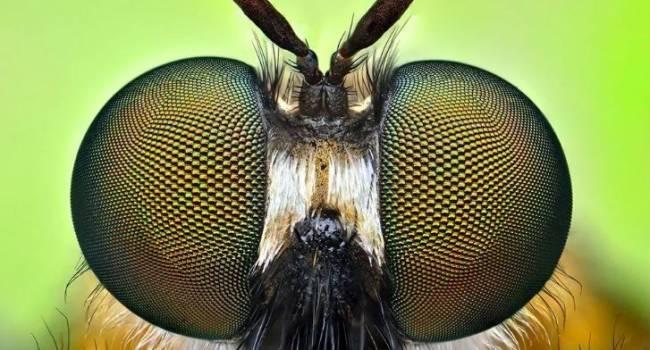 Ученые обнаружили неизвестный науке вид насекомых на территории Армении