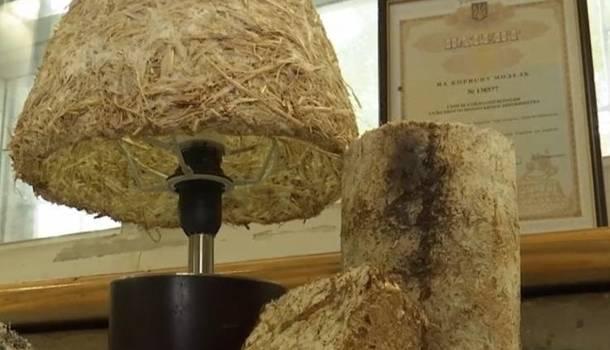 Херсонские ученые сотворили невероятный пластик из грибов