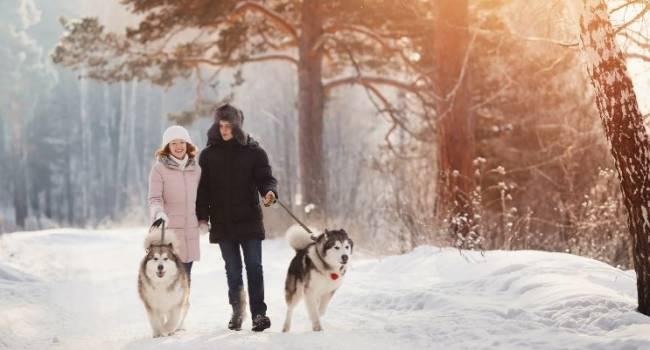 Владельцев собак предупредили об опасности прогулок в новогоднюю ночь