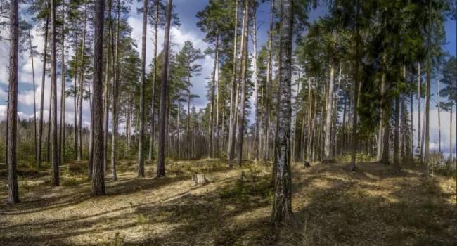 «Отвыкайте от прежнего климата»: синоптик дала неожиданный прогноз на 2021 год