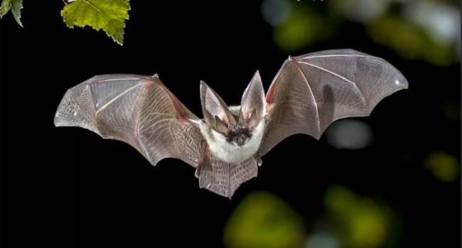 Летучие мыши - это далеко не всё: биолог назвал животных, распространяющих опасные вирусы