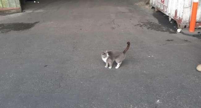 «Три недели и он выжил»: кот из Одессы уехал в Израиль и питался одними конфетами