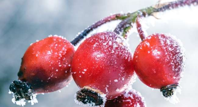 «Защитит от раковых заболеваний»: Медики рассказали о целебном растении