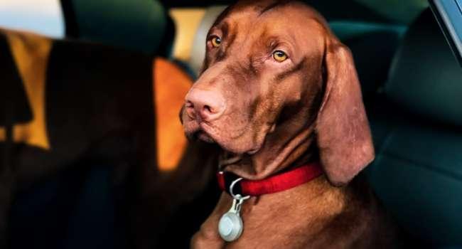 «Ура, теперь можно не продавать собаку!»: Пенсионные выплаты будут увеличены