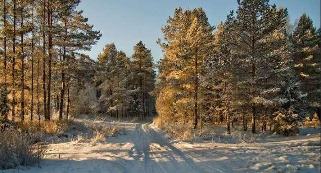 Перепад температур до 15 градусов: в Гидрометцентре рассказали о внезапном потеплении в Украине