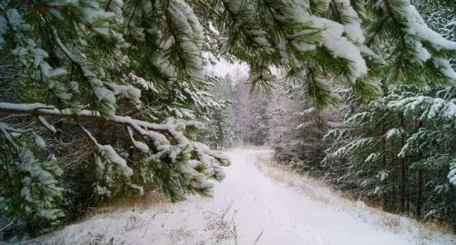 Начинается снежный шторм: синоптики предупредили о сложной погоде 27 января