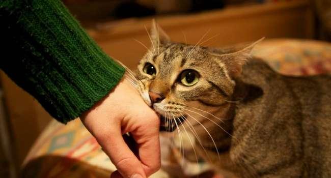 Учёные: кошачьи царапины могут привести к развитию шизофрении