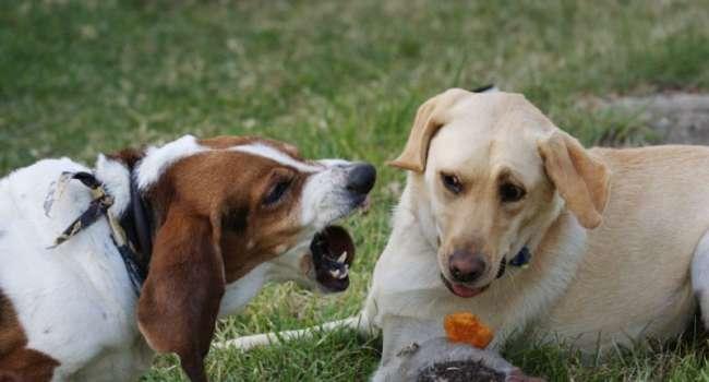 Кинолог назвал причины появления агрессии у собак