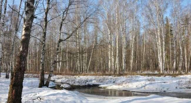 Весна вступила в свои права: синоптики рассказали о погоде в первые дни марта