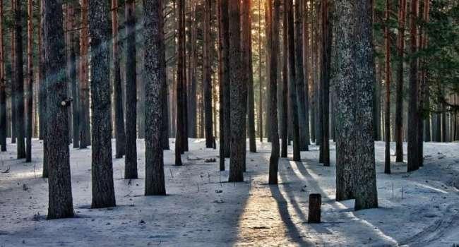 Снега и дождей не будет: синоптики рассказали о холодной погоде в выходные