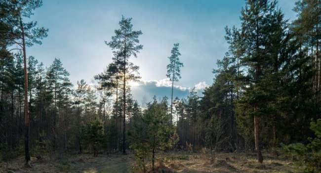 Очень много солнца: синоптик рассказала о стремительном потеплении в Украине
