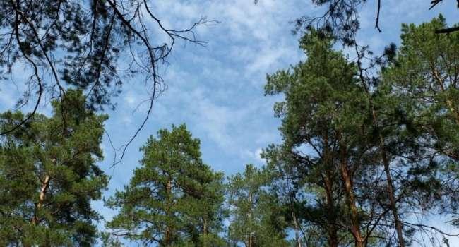 Ещё одна волна похолодания в середине месяца: синоптик предупредила о непогоде