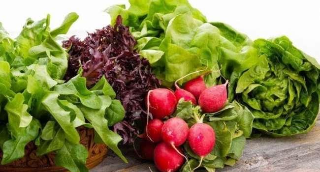 Доктор: «Первые весенние овощи ни в коем случае нельзя употреблять детям»